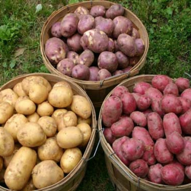 Сорта картофеля, которые не …