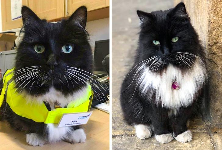 16 котов, которые трудятся, несмотря на то что у них лапки