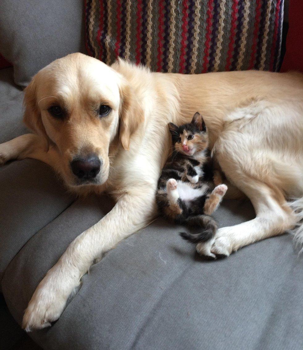 Две собаки сражаются за расположение одной кошки и мечтают стать её личными телохранителями