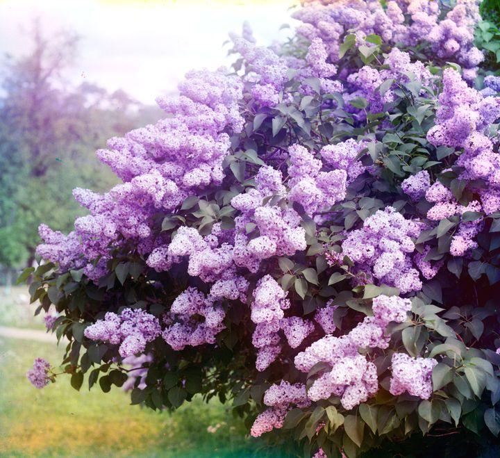 Волшебные ароматы в саду