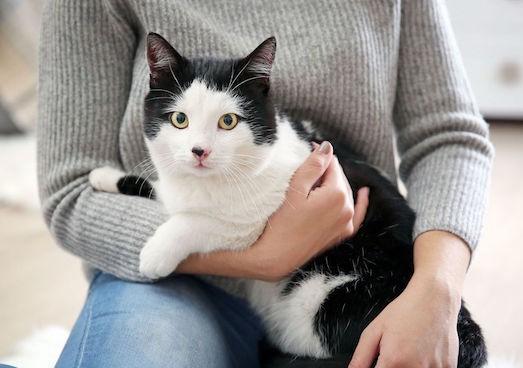 Как лечить грипп у кошки в домашних условиях