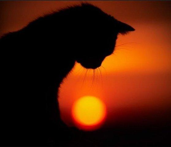 Кот пришел на похороны своей маленькой хозяйки