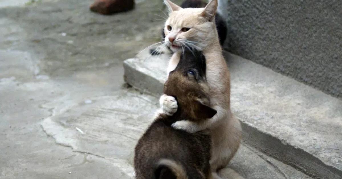 Кот по прозвищу Папа Тереза