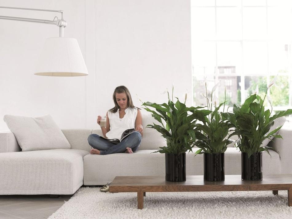 Комнатные растения очищающие воздух. Наилучшие зеленые фильтры
