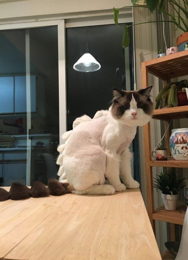 Оставили кота соседу всего на 1-у неделю...