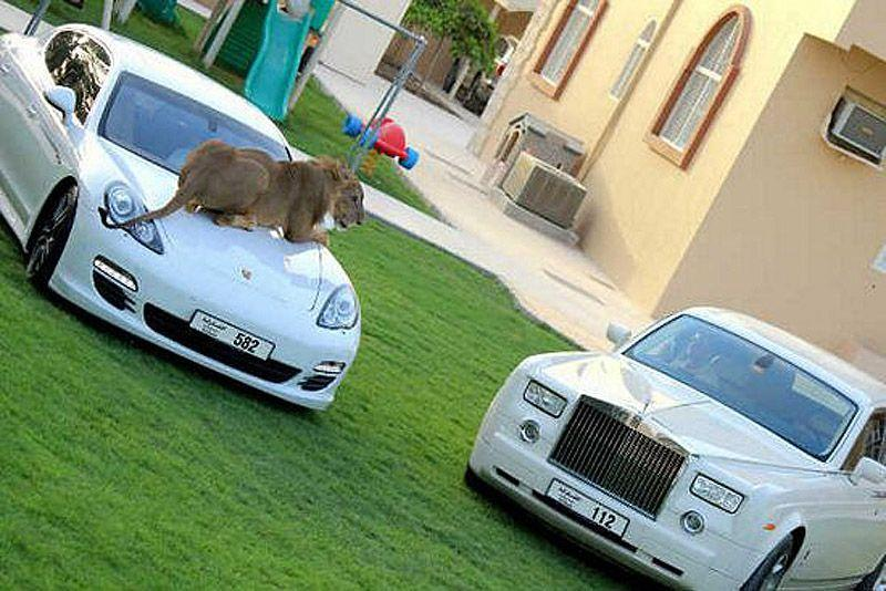 catsncars23 Хищные кошечки и дорогие машины: досуг арабского миллионера