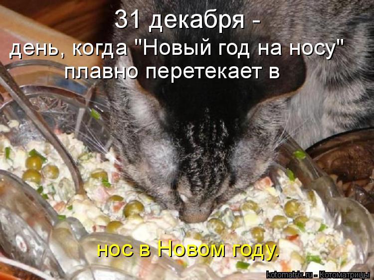 """Котоматрица: 31 декабря -  день, когда """"Новый год на носу"""" плавно перетекает в  нос в Новом году."""