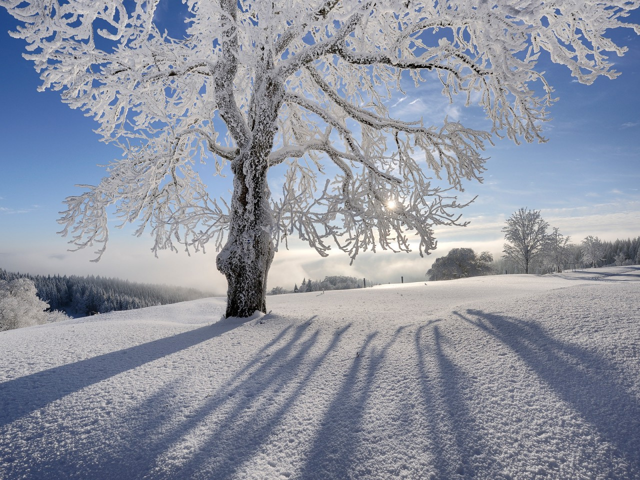 800x600 солнце, снег, дерево картинки на рабочий стол обои фото скачать