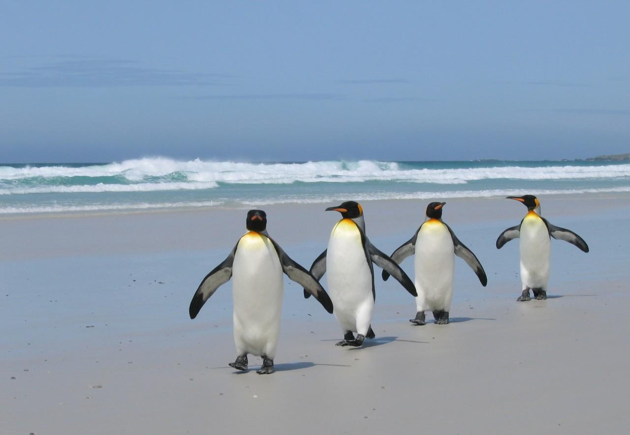 http://www.freakingnews.com/images/app_images/penguins-2.jpg