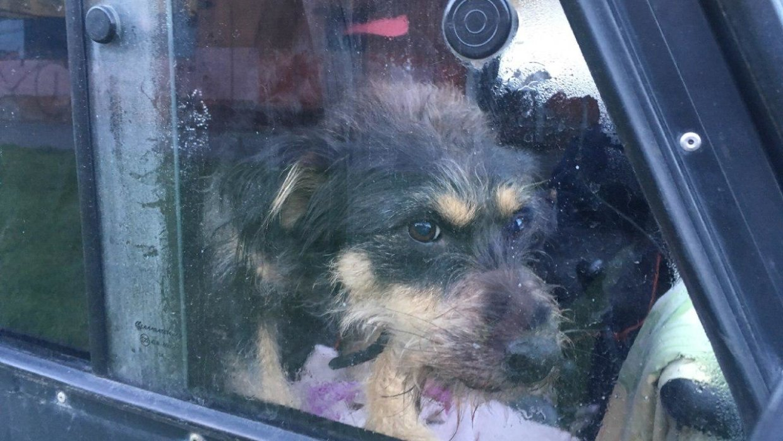 Неагрессивных собак могут отпускать из петербургских приютов