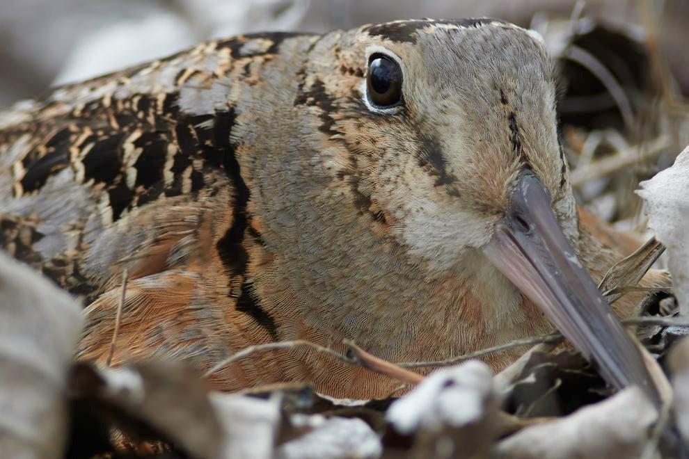 Орнитологический фотоконкурс