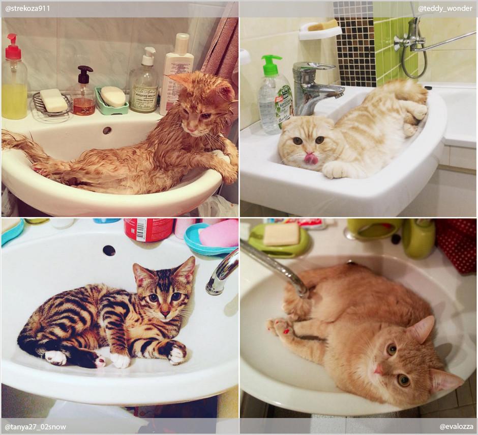 Кошки и вода: самые интересные фото