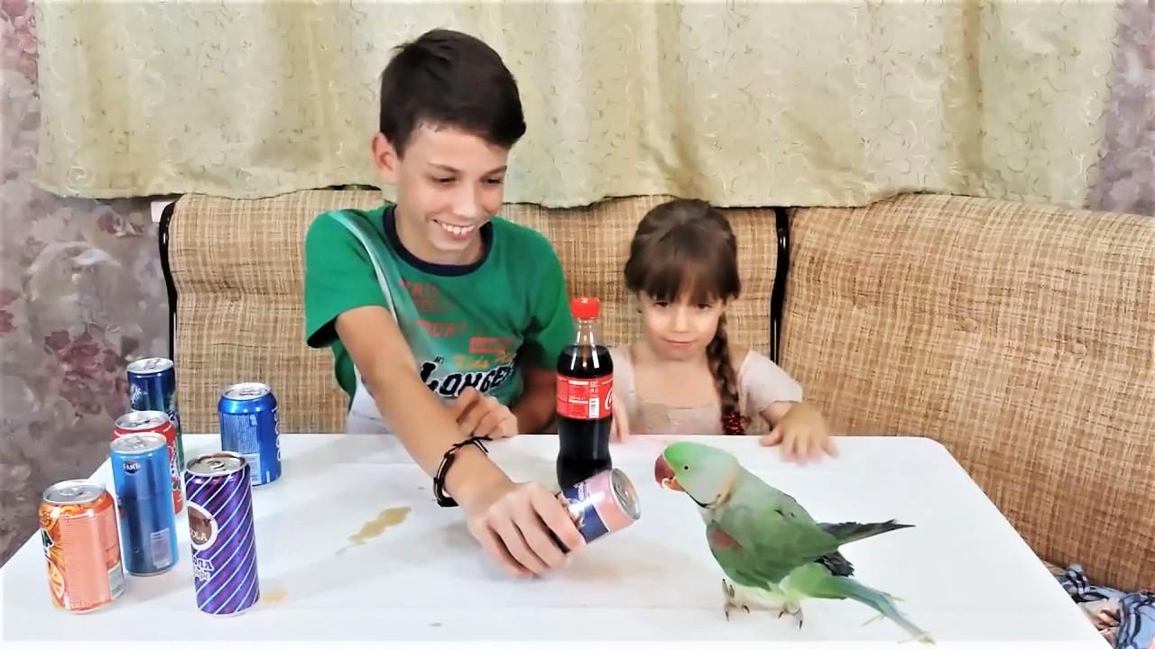 Самые милые видео с животными Попугай открывашка и свинка чесалка