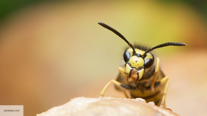 Ученые создали безопасный антибиотик из яда осы