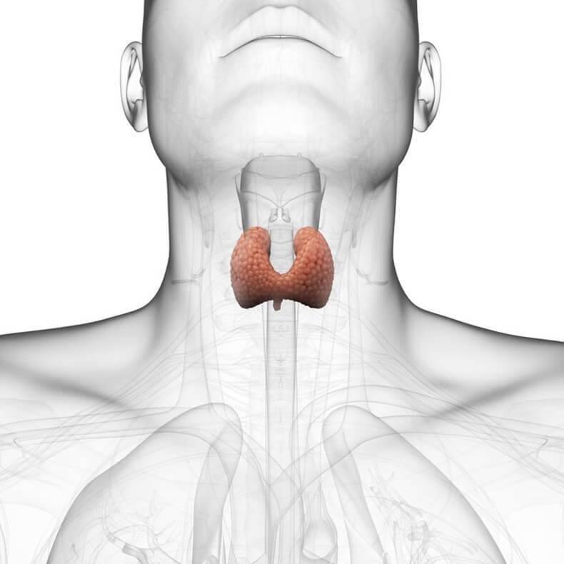 Заболевания щитовидной железы: психологические причины