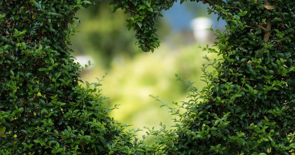 Любовь — это какая-то насмешка природы