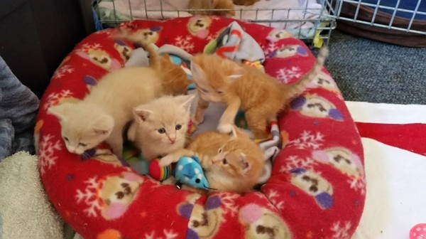 Их оставили на улице...но они не сдались добро, дом, котята, приют