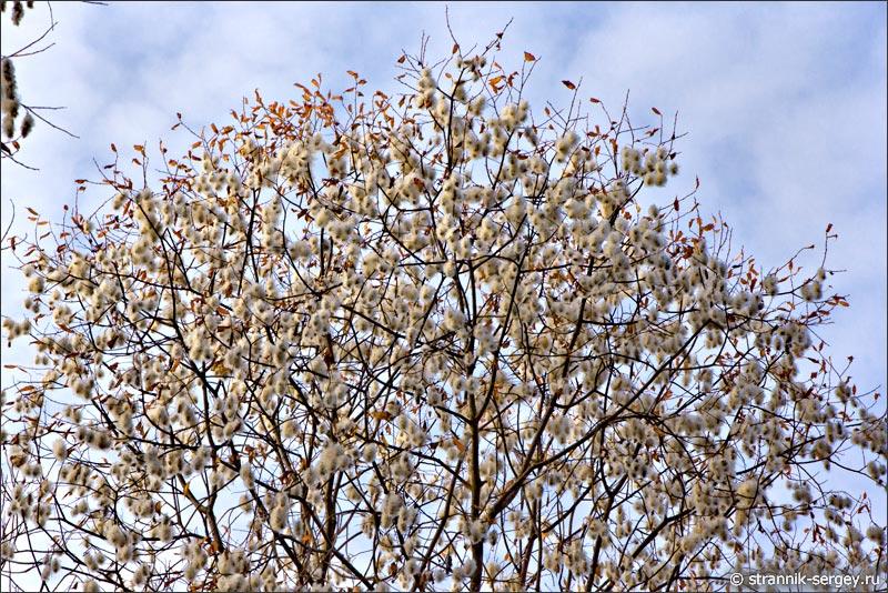 Весна поздней осенью