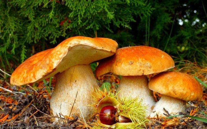 осенние грибы фото - 05