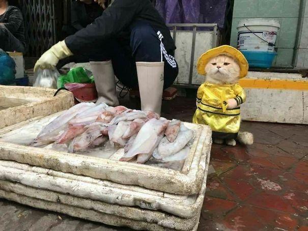 Потрясный уличный торговец — стильный кот по кличке Собака