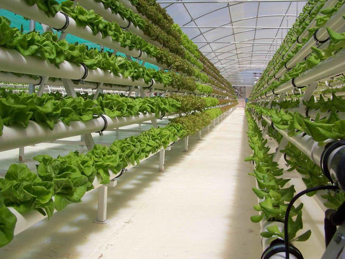Огурцы - выращивание, посадка, уход. В открытом грунте и 45