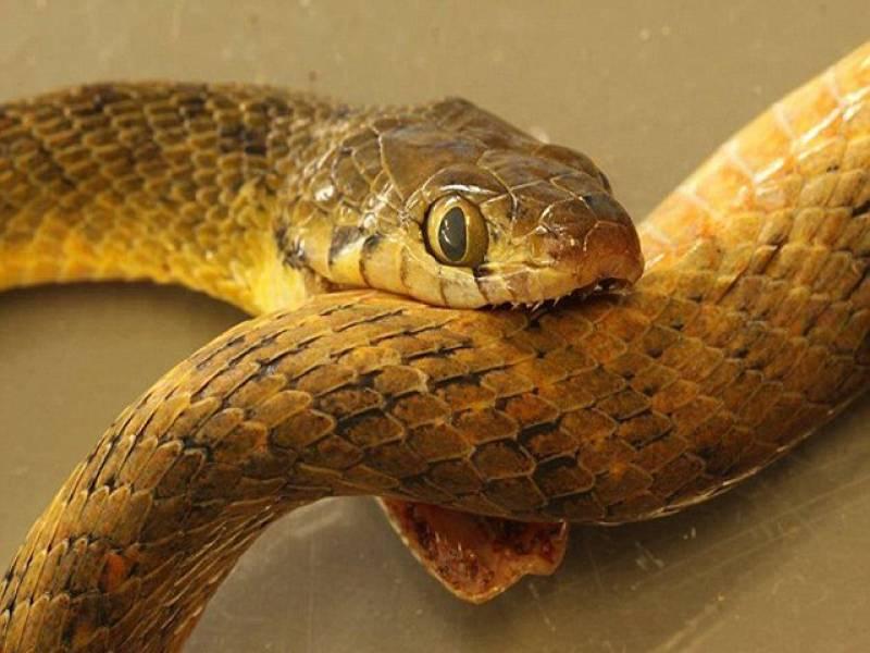 Змея-самоубийца свела счеты с жизнью на пороге дома