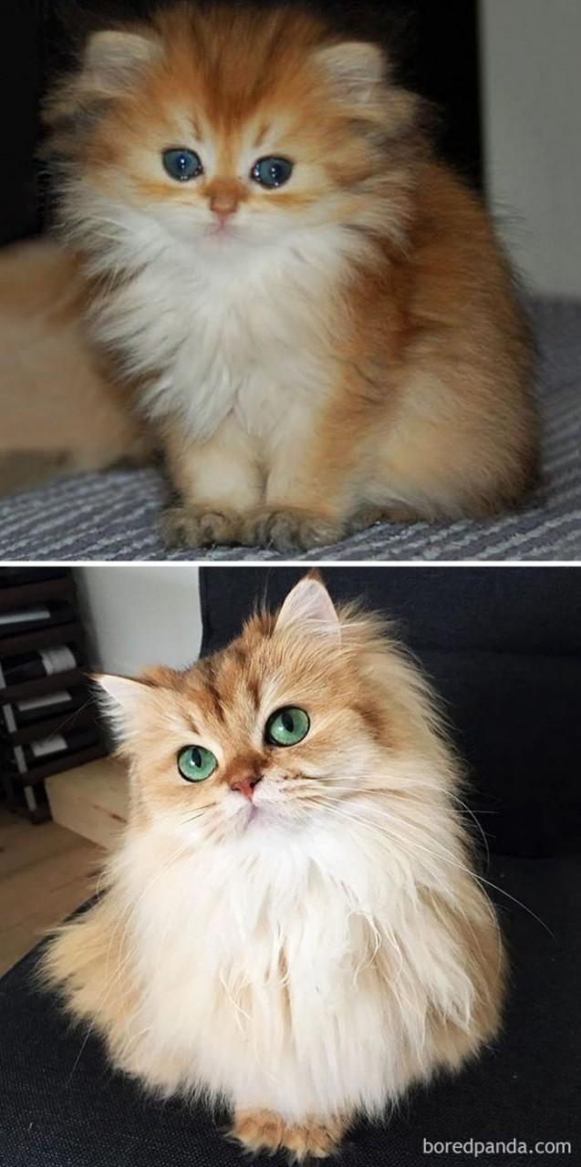 Котята, которые с возрастом …