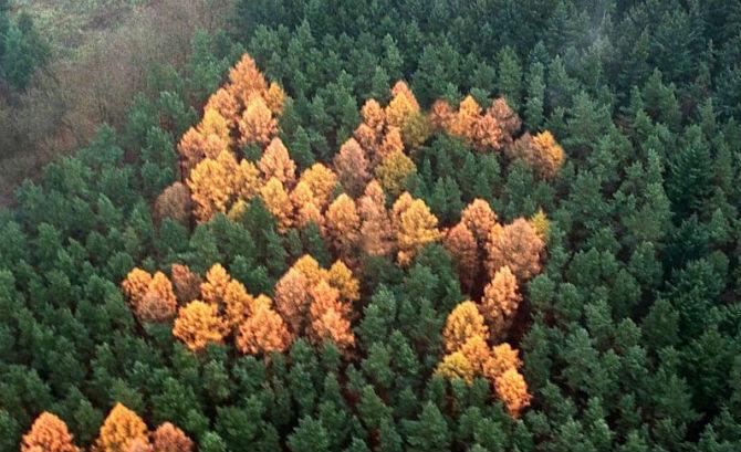 Свастика из деревьев - черное прошлое Германии