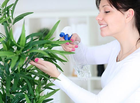 plants0115-10.jpg