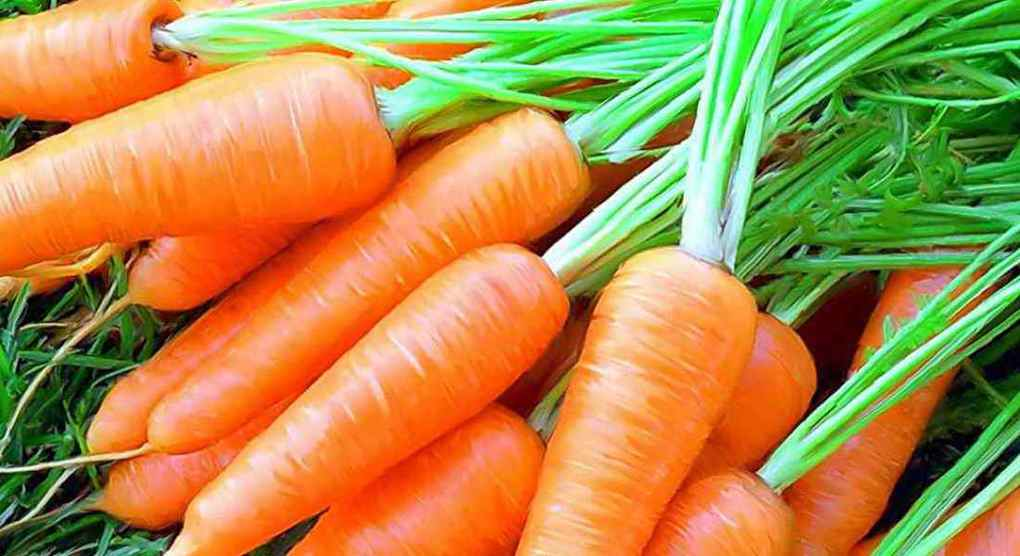 Хитрый способ посадки морков…