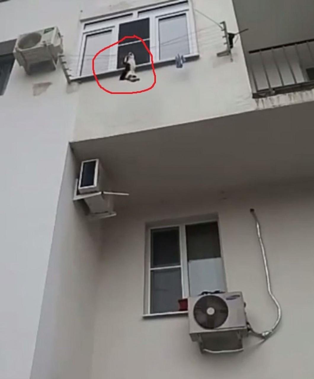 В Сочи продюсер телеканала спасла выпавшую из окна кошку