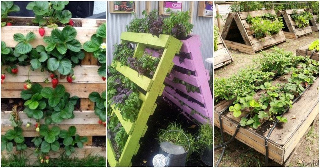 Поддоны на огороде: полезные идеи для дачи
