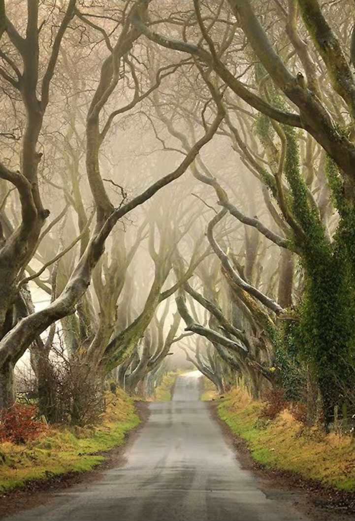 Mysterious trees in Ireland - 9
