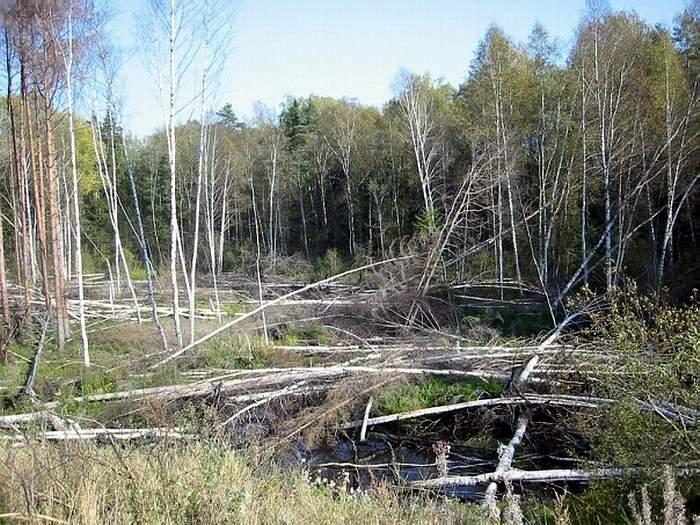 Петракова лядина - загадочное место в Псковской области
