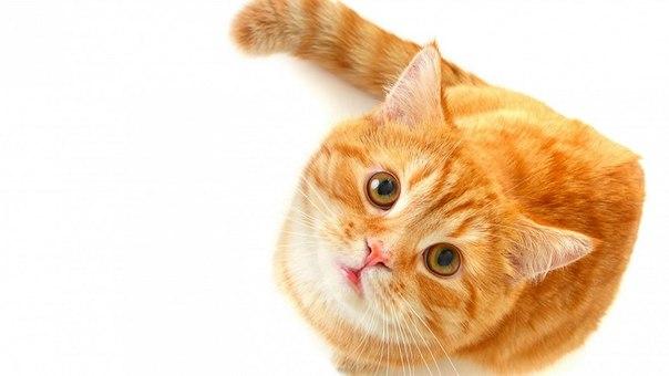 25 коротких фактов о животных: