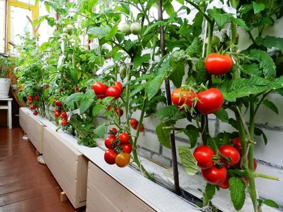 Блог им. alenalapikova: Сода в огороде – 10 способов применения: Органическое земледелие, пермакультура