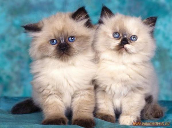 Исторические факты о жизни кошек