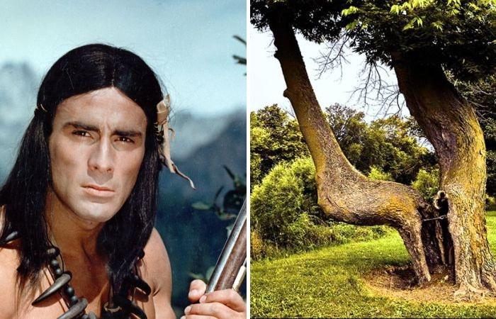 Секрет настоящих индейцев: как легко ориентироваться в густом лесу