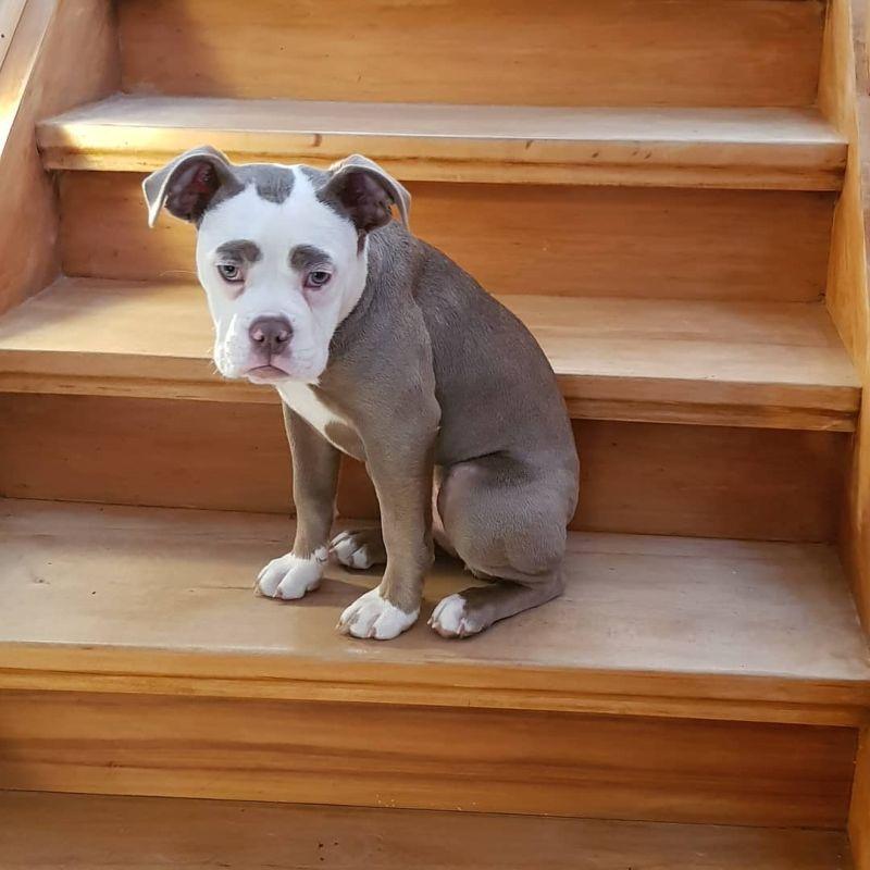 Самая грустная собака в мире
