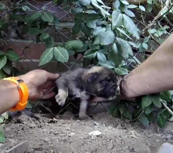 История спасения щенка, который застрял в заборе
