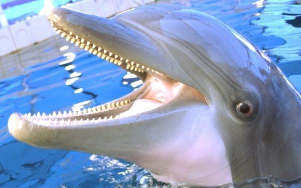 Российская армия приняла на службу крымских боевых дельфинов