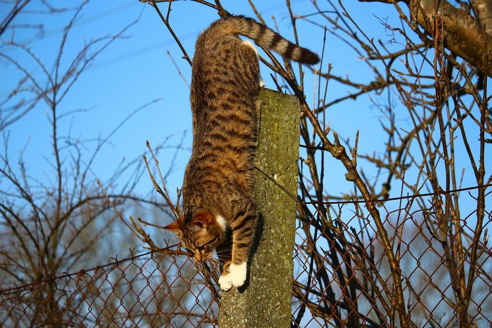 В Зеленоградске спасли кота, два дня просидевшего на дереве