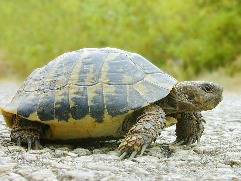 КОШКИН ДОМ. 12 интересных фактов о черепахах