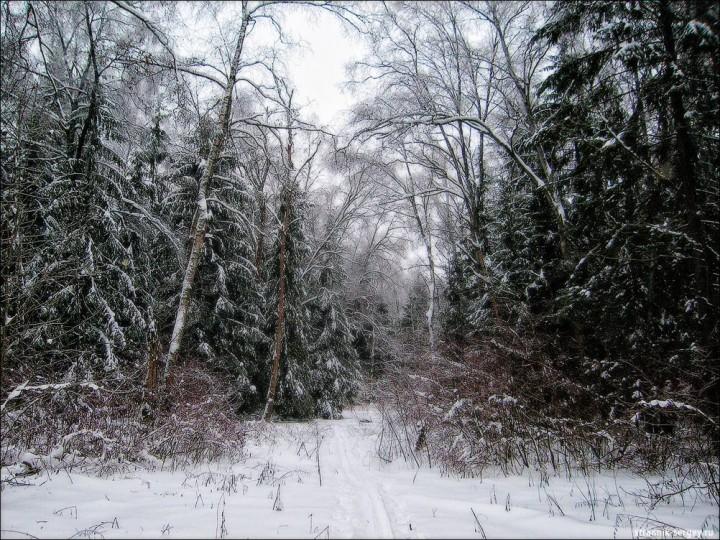 Холодная красота ледяного царства