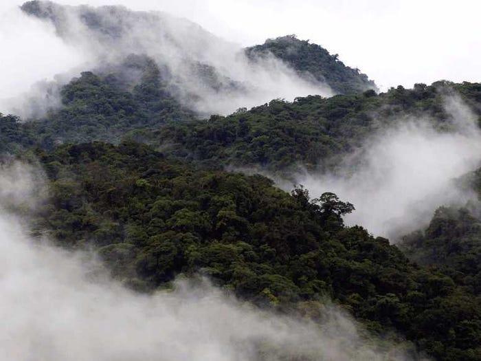 Красивейшие леса мира, которые показывают силу Матери Природы