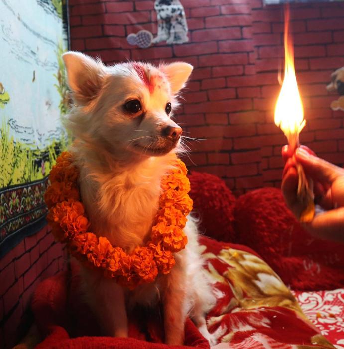 Во второй день фестиваля почести воздаются собакам. 10 ноября 2015 г.