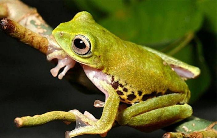 Картинки по запросу ядовитые лягушки в Азии в Таиланде и Азии
