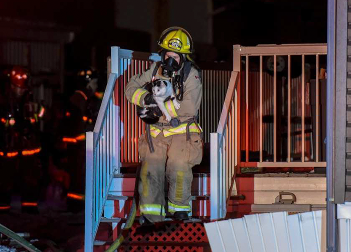 Cat Bites Her Owner In The Middle Of Night To Warn Her The House Is On Fire