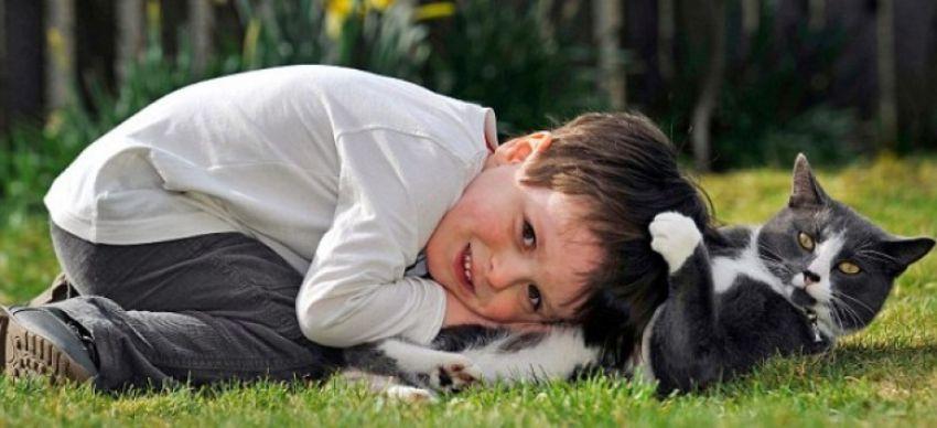 Терпение домашних животных домашние животные, дети, терпение