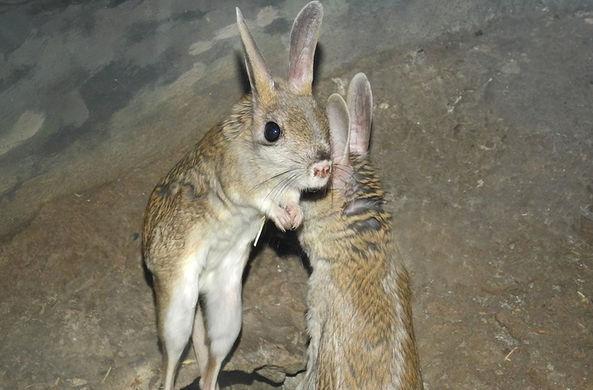 Ведущий зоолог Московского зоопарка рассказал о проснувшихся тушканчиках